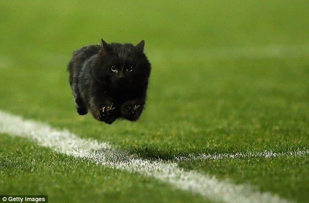 A black cat that made its way onto the field was the highlight of a Sunday afternoon rugby...