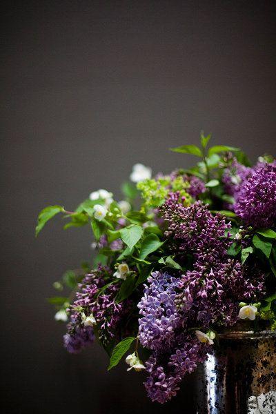 purple & lavender lilacs