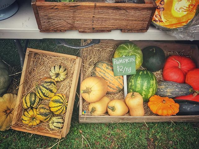 The Kangaroo Valley Farmers Market- what a seasonal feast  @visitkangaroovalley @the_friendly_inn @visitshoalhaven #kangaroovalleyfarmersmarket #kangaroovalley #food #farmersmarket #fresh #freshproduce #pumpkins #grow #gather #eat #clovarcreative #love #travel #newsouthwales
