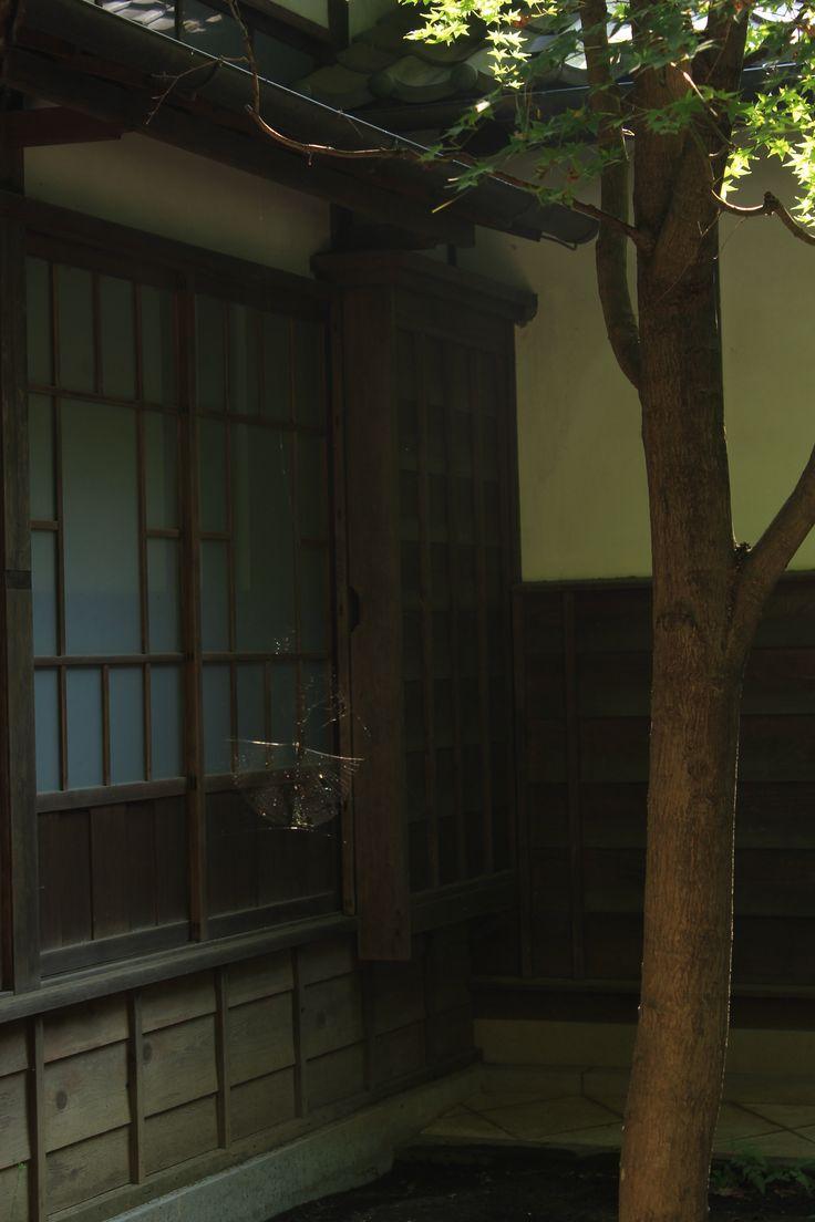 sun shining on a spider web, Edo-tokyo Tatemonoen, Tokyo