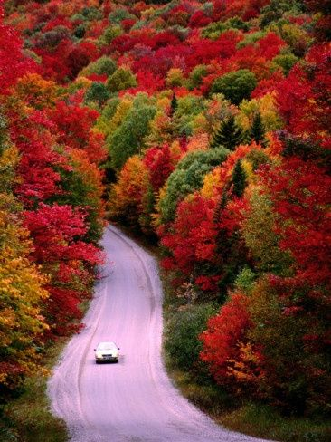Autumn leaves drive