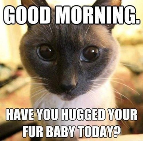 Good Morning Cat Meme : Have you hugged your fur baby today funny memes
