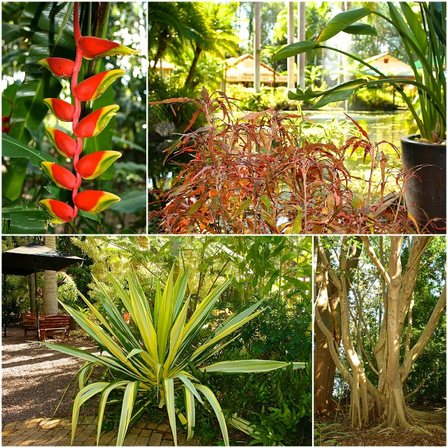 The Ginger factory Gardens on the QLD Sunshine Coast www.myoceanbliss.com