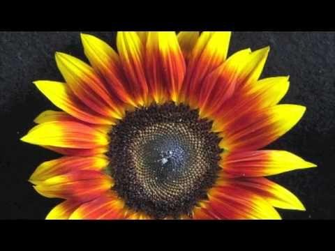 "▶ JS Bach-Cantata BWV 82, ""Ich habe genug""-Andreas Scholl - YouTube"
