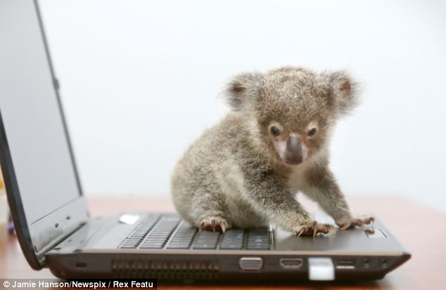 Baby Koala Cutest Thing Ever Pinterest