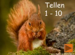 Digibord: eekhoorn tellen- wintervoorraad- Digibordonderbouw.nl juf Gertruud