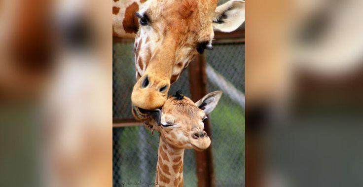 Nacen 219 crías en zoológicos del DF, en lo que va del 2015 (Fotos) - Aristegui Noticias