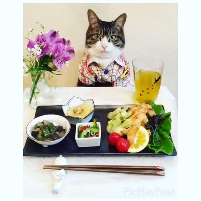 いいね!13.2千件、コメント335件 ― @rinne172のInstagramアカウント: 「Chicken nugget, Tempura of broad beans, Eggplant and Bell Pepper Miso Stir Fry, Bitter melon salad…」