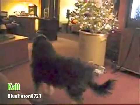 Kerstliedje, gezongen door dieren. - YouTube