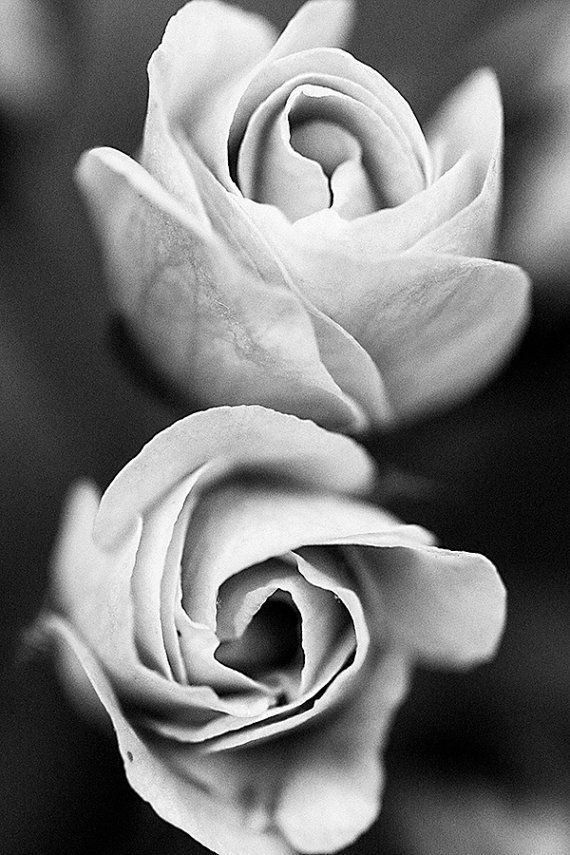 Flower Print Roses Black & White Macro Nature Close by DKPhotology