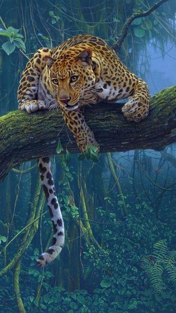 Cheetah Jaguar Animal Animals Beautiful Big Cats Art