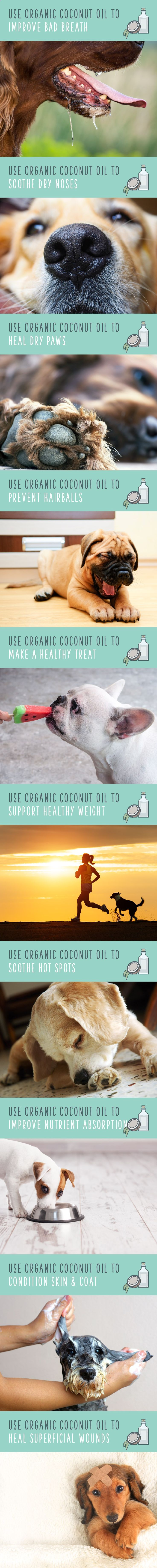 623 best Dog Health images on Pinterest