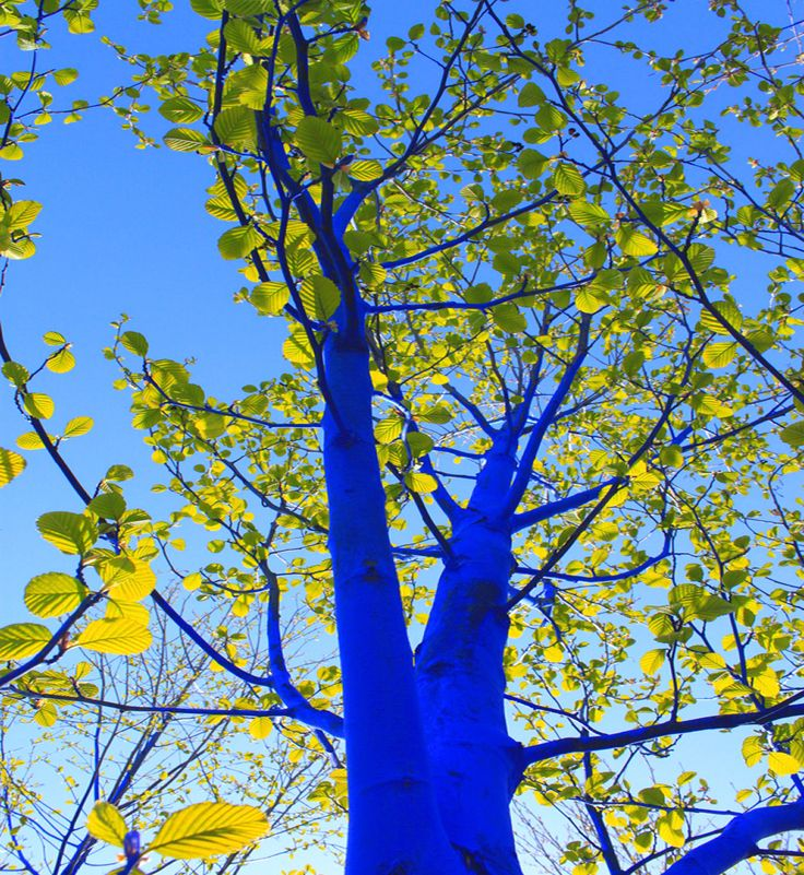 Konstantin Dimopoulos The Blue Trees, Vancouver, Canada Photo: David Brown