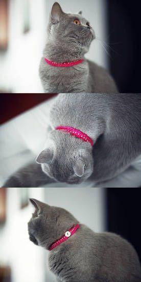 obroża dla kotałka | digart | digart.pl