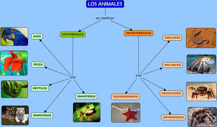 Los invertebrados se clasifican en varios grupos:  Los invertebrados CON protección corporal      Artrópodos     Moluscos     Equinodermos  Los invertebrados SIN protección corporal      Gusanos     Poríferos (Esponjas)     Celentéreos.          Los vertebrados son animales que tienen esqueleto óseo, huesos internos o cartilaginoso.  Los animales se parecen y también se diferencian y de esta forma se pueden agrupar en 5 grupos:      Mamíferos     Aves     Peces     Reptiles     Anfibios