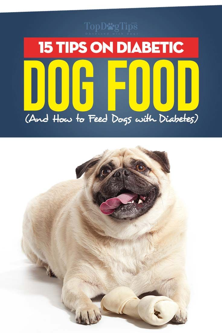 The 15 Tips on Diabetic Dog Food and How to Feed Dogs with Diabetes # homemadedogfood #diabeticdogfood