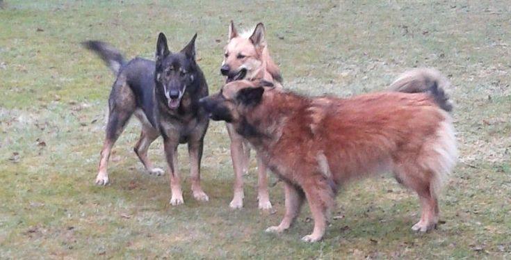 Adopteer een geredde hond bij Tierheim Kranenburg, het asiel zonder hokken.
