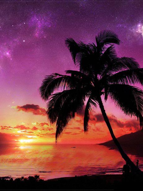 Palm Tree Sunset I / 2815, tropical vinyl wall decor / photo backdrop