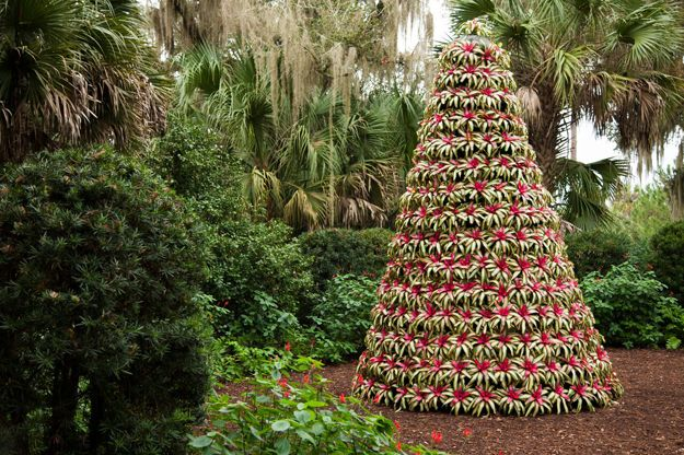 Twelve Authentic Florida Holiday Things to Do   Authentic Florida