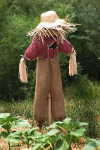 Scarecrow Songs For Kids - http://www.preschoollearningonline.com/preschool-songs/scarecrow-songs-for-kids