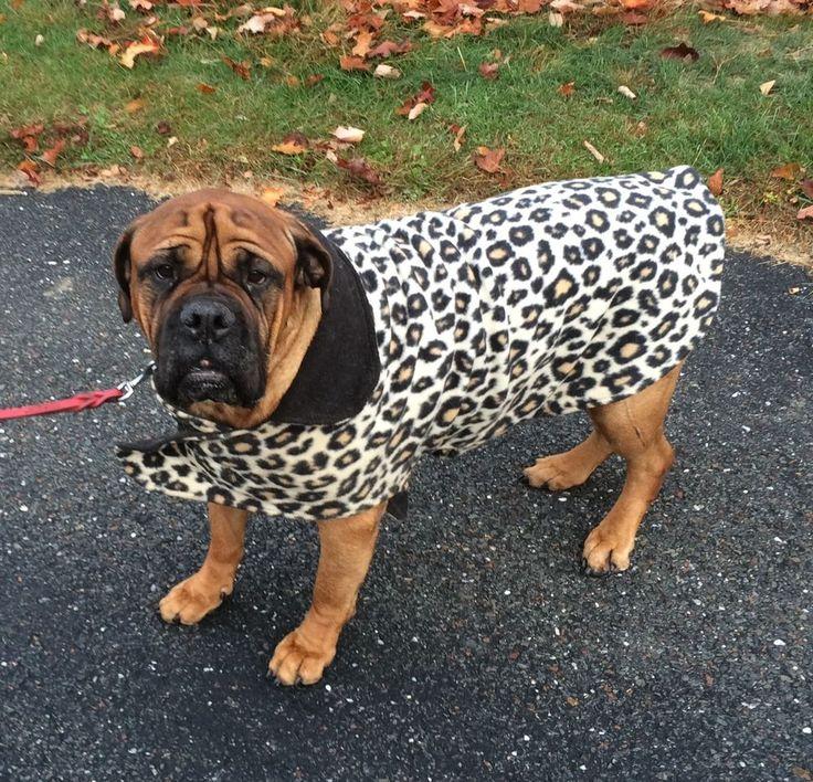 Custom Hand Made Reversible Fleece Dog Coats to benefit Bullmastiff Rescue
