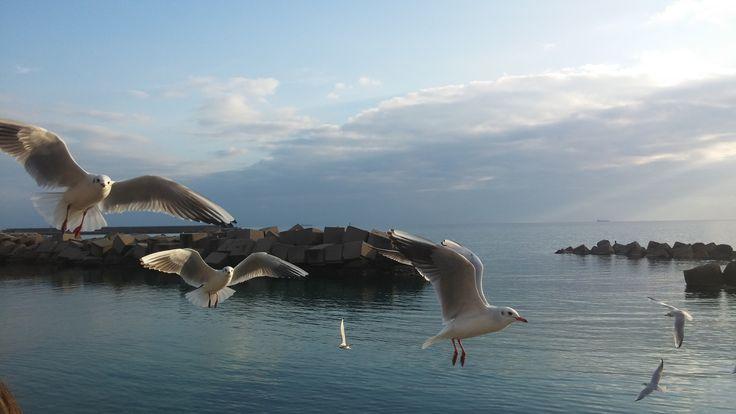Lungomare di #Salerno, bellissimo! http://www.livesalerno.com  #lungomare #promenade #campania #italy