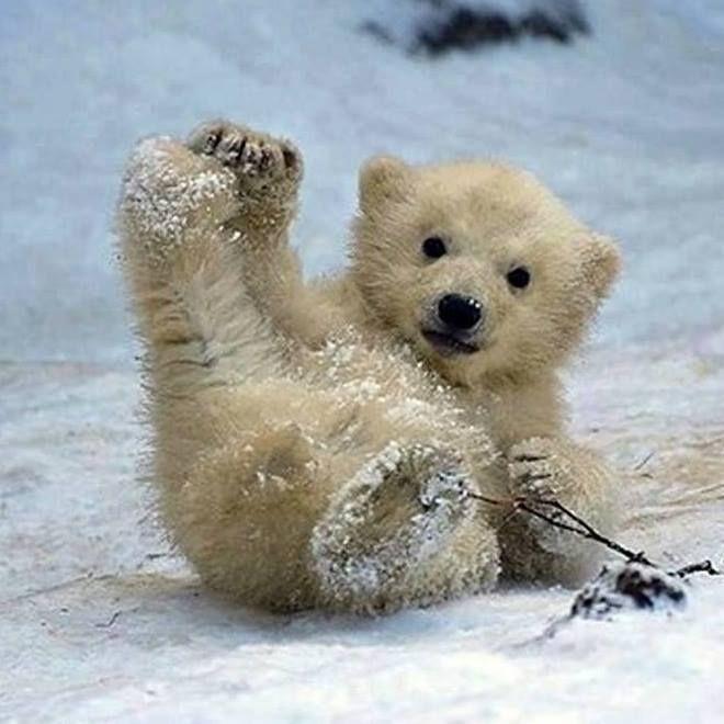 in de sneeuw   **MIA PLAATJES CARROUSEL**