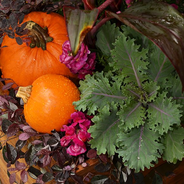 4 Festive Ideas for Fall Container Gardening: Gardens Ideas, Container Gardens, Fall Flowers, Fall Decor, Fall Favorite, Fall Container, Planters Ideas, Festivals Ideas, Fall Gardens
