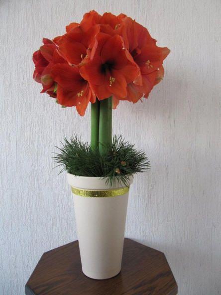 bloemstuk maken met amaryllis bloemen