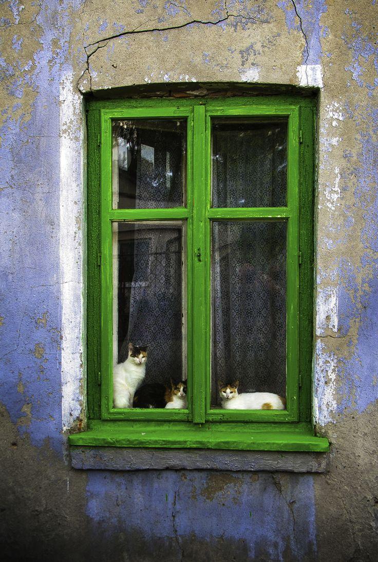Bobowa and Cat Window - Lodz - Poland