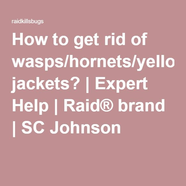the 25 best get rid of wasps ideas on pinterest natural wasp repellent wasp spray and keep. Black Bedroom Furniture Sets. Home Design Ideas
