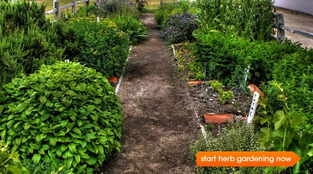 Growing a Kitchen Herb Garden    Customize an herb garden to your favorite cuisines: Four garden plans for cooking Italian, Asia, Tex-Mex, and French foods  by Esther Sung