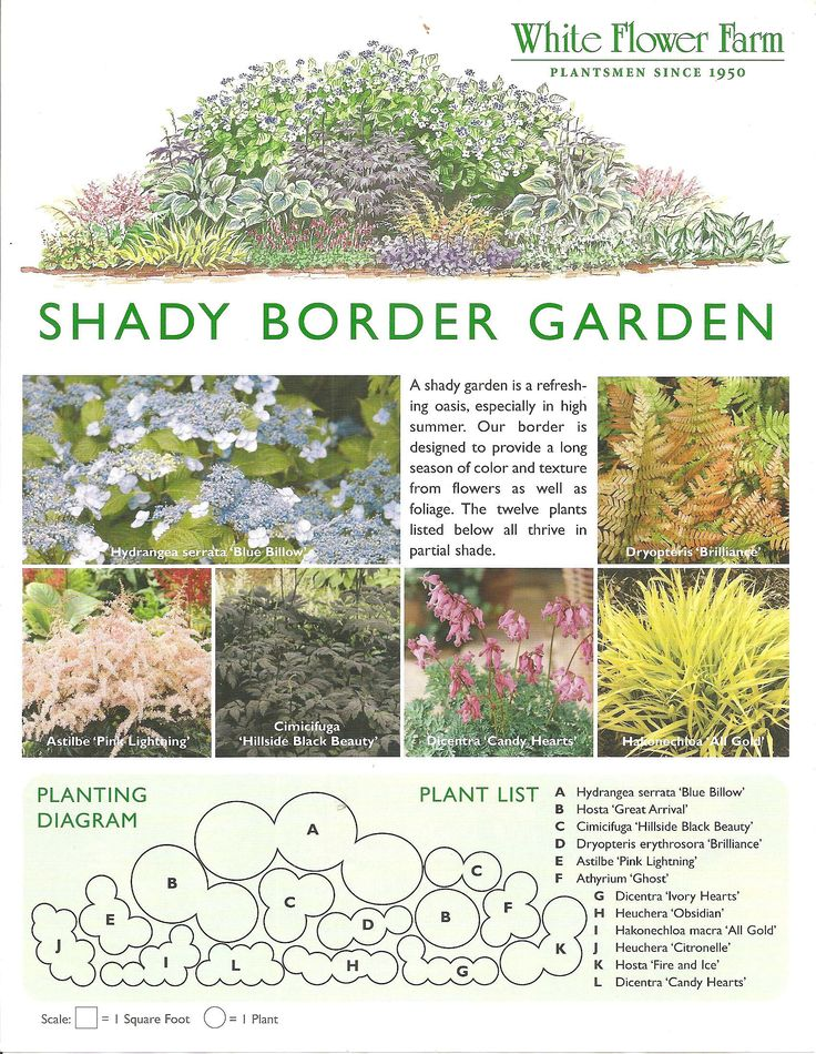 Shady Border Garden Plan from White Flower Farm;  Border plan is designed to provide a long season of color and texture from flowers as well as foliage.