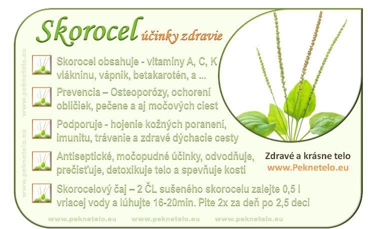 Skorocel kopijovitý – silná nenápadná bylina | Peknetelo.eu