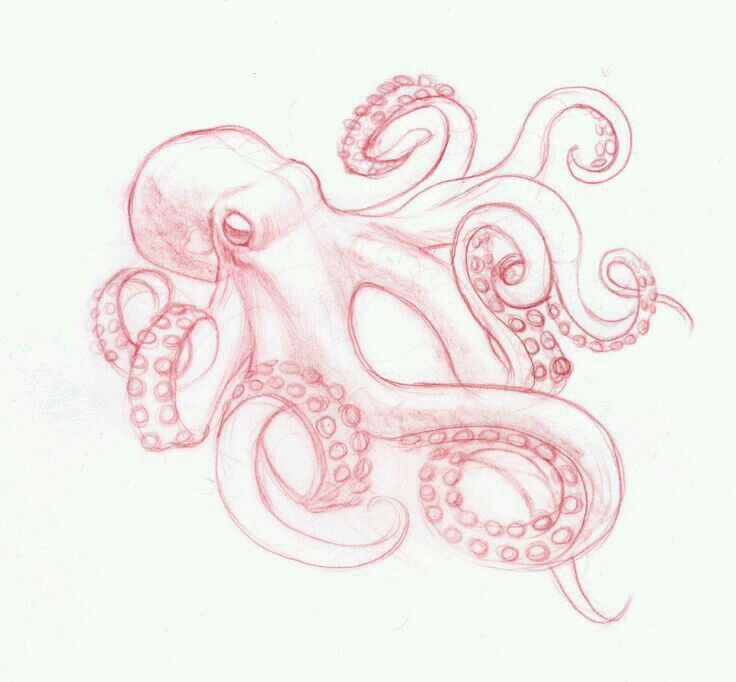 Octopuses drawing tattoos pinterest octopus drawing for Octopus drawing easy