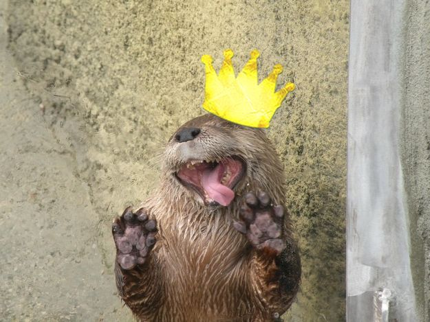 Animals March Madness: First Round Results