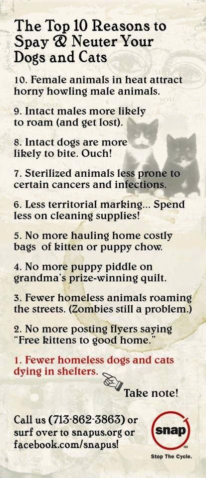 SNAP's top 10 reasons to #spay and neuter