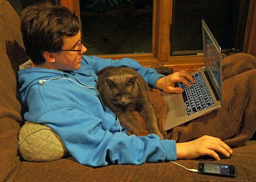 Study Cats