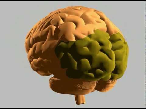 The more you understand how the brain operates the more you'll understand what is happing during a Hemiplegic Migraine attack easing the stress of a frightful situation. Much can be accomplished and controlled by lowering your bodies natural panic reaction.