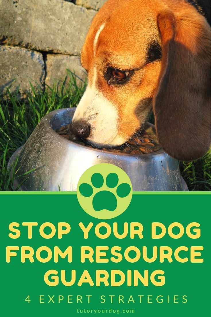 The Top 4 Ways To Stop Your Dog From Resource Guarding Dog