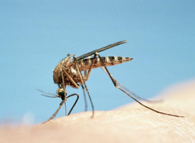Piqûre de moustique : ce qu'il se passe dans notre corps et les signes d'une réaction anormale