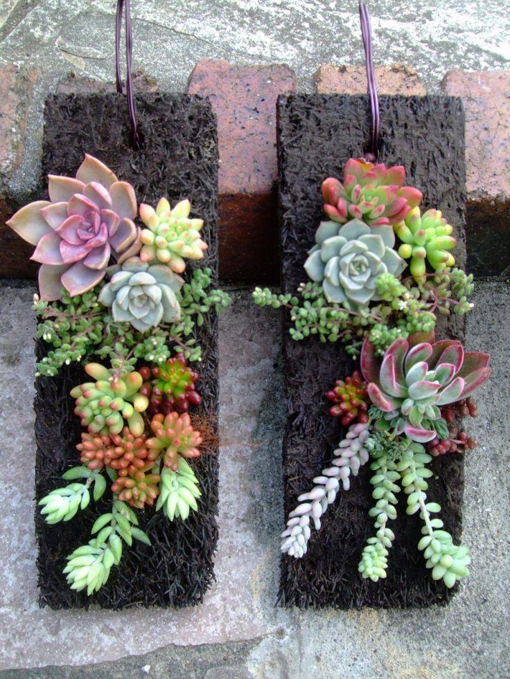 ♪多肉植物ヘゴ板付け壁掛けオブジェ~10×30~2012.11.29作成