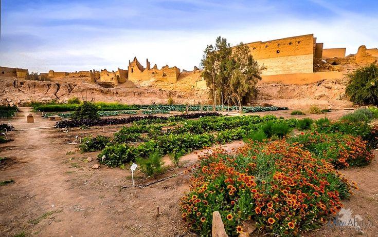 Diriyah Organic Farm - 15 Activities To Do in Riyadh During The Winter | Blue Abaya