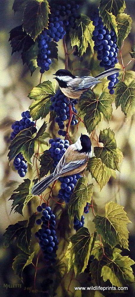 Rosemary Millette Vineyard Chickadees