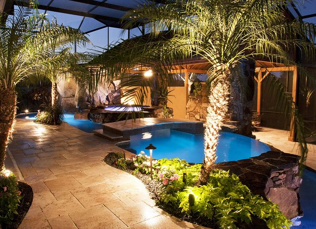 17 Best Ideas About Indoor Palm Trees On Pinterest Indoor Palms Large Indoor Plants And