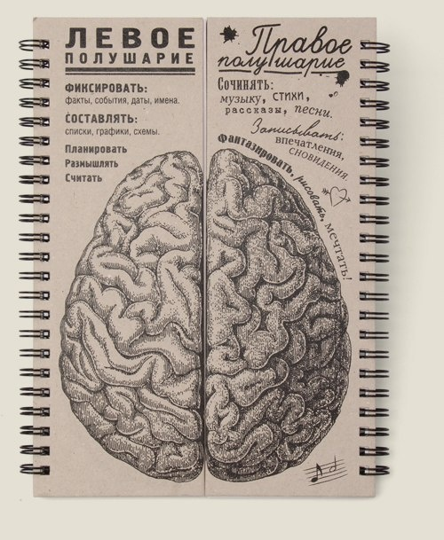 Левое и правое полушарие мозга
