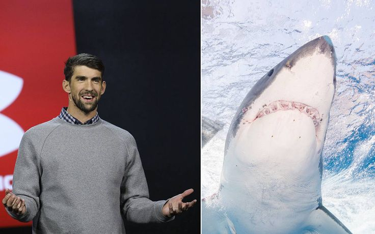 Michael Phelps vs. great white shark leaves fans disappointed https://tmbw.news/michael-phelps-vs-great-white-shark-leaves-fans-disappointed  On Sunday night, Michael Phelps was bested in the Discovery Channel's Shark Week special, Phelps vs. Shark: Great Gold vs. Great White.The 23-time Olympic gold medalist swimmer was never going to race against a real great white shark, but many fans believed he was.The computer-generated simulation of a shark beat Phelps by two seconds in Sunday's…