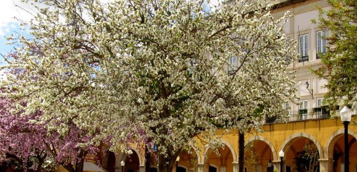 Blossom brightens the streets of Silves