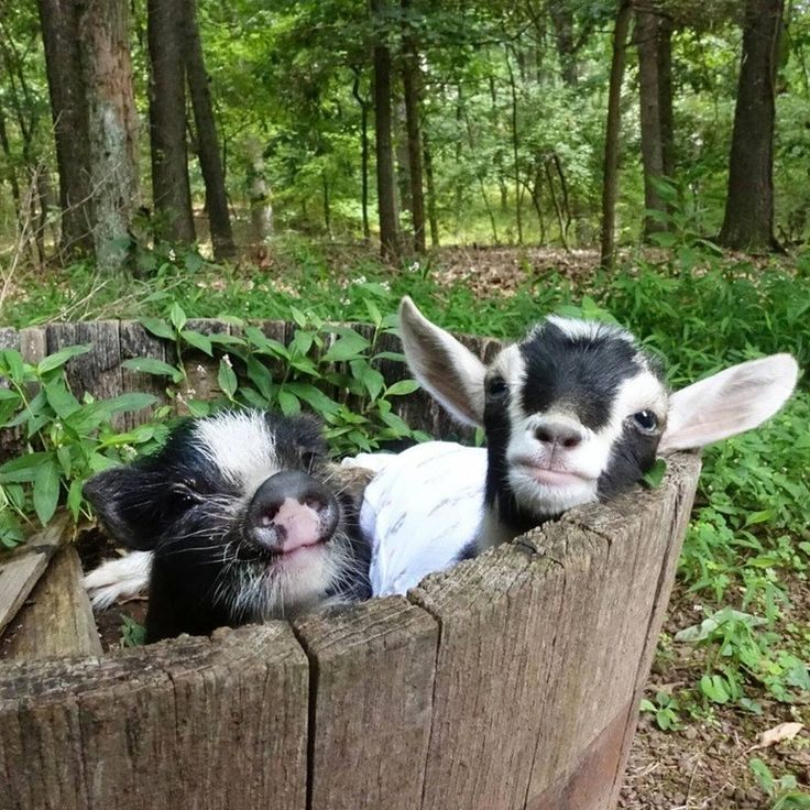 Just a Couple of Friends Kidding Around and Hogging the Planter