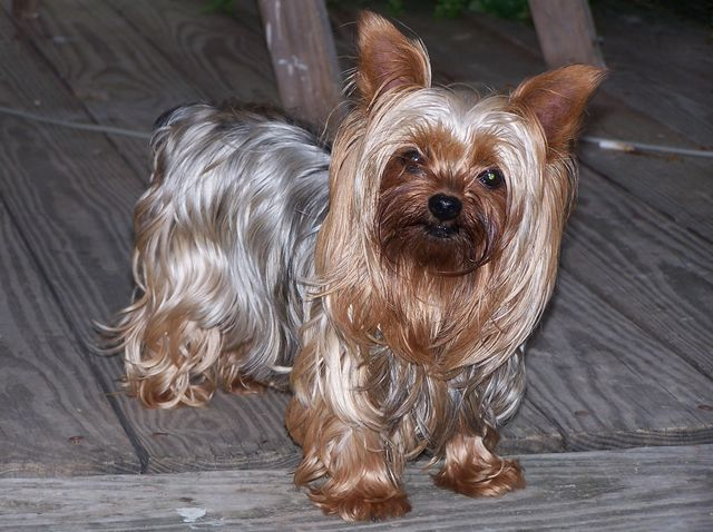 Can You Name 99 Dog Breeds?
